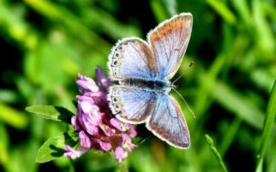 Zo blijf je zelf de baas over je eigen leven en je emoties: de Vlindermethode